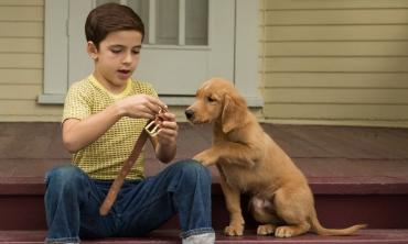 Qua la zampa! Il senso della vita secondo i cani
