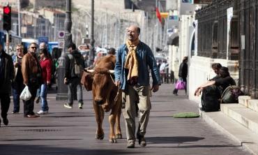 In viaggio con Jaqueline: tre uomini e una mucca in un'adorabile avventura on the road