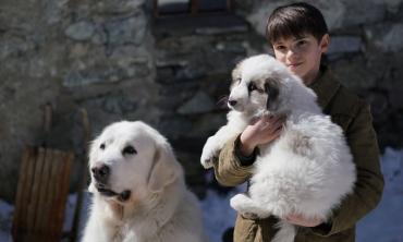 Non c'è due senza tre, arriva al cinema Belle & Sebastien – Amici per sempre