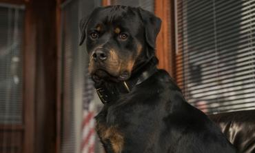 Show Dogs - Entriamo in scena, il film che aiuta gli animali